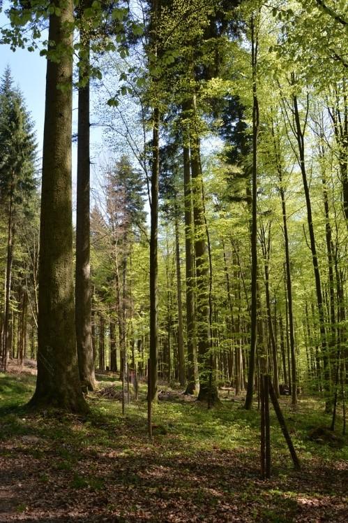 Der Goldbacher Wald ist ausgezeichnet!