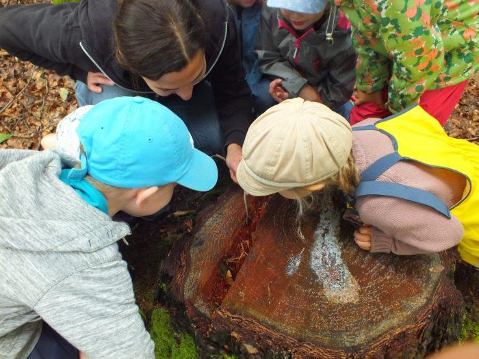 Raus in die Natur! Der erste Goldbacher Waldkindergarten.